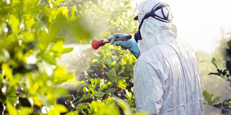 Landscaper using pesticide on a tree.