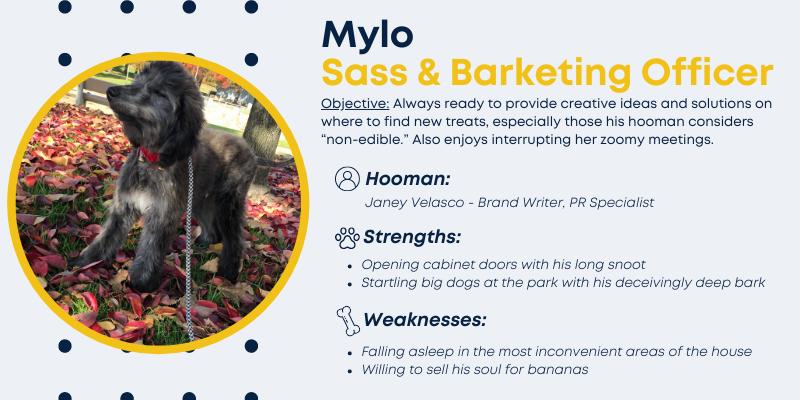 Mylo, Sass and Barketing Officer.
