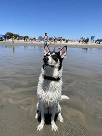 Kaia the dog
